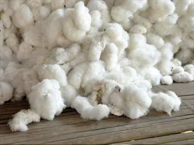 raw-cotton2.jpg
